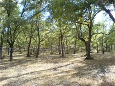El bosque mediterráneo | La guía de Geografía