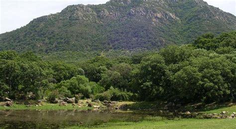 El bosque mediterráneo se reducirá a matorral en 100 años ...
