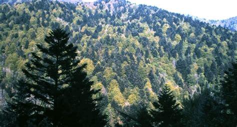 El cambio climático afecta a los bosques mediterráneos de ...