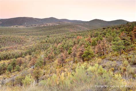 El cambio climático amenaza de muerte al bosque mediterráneo