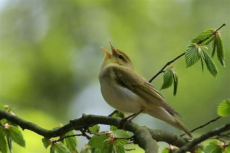 El canto de los pájaros y el sueño de verano