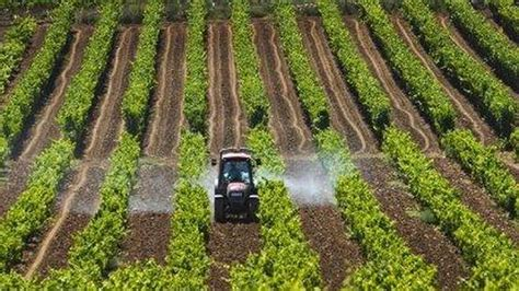 El comercio con derechos de plantación se permitirá hasta ...