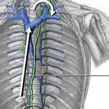 El conducto torácico linfático: anatomía. El sistema ...