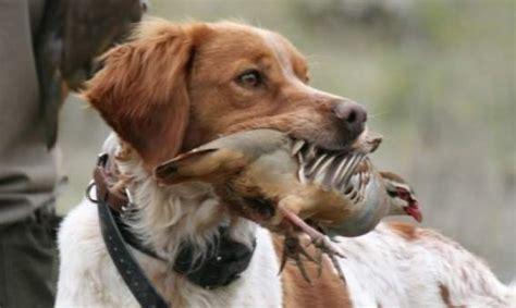El Convenio Europeo de PROTECCIÓN ANIMAL, en vigor en España