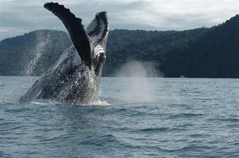 """el cronista errante: Bahía Solano, Colombia: """"Ballenas a ..."""
