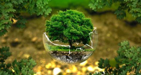El cuidado del medio ambiente, una responsabilidad ...
