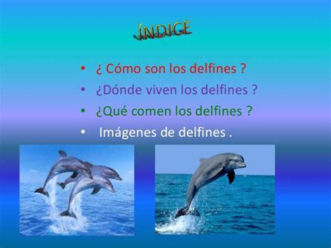 El delfín maría 3