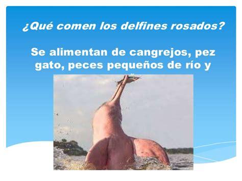 El delfin rosado en peligro de extinción