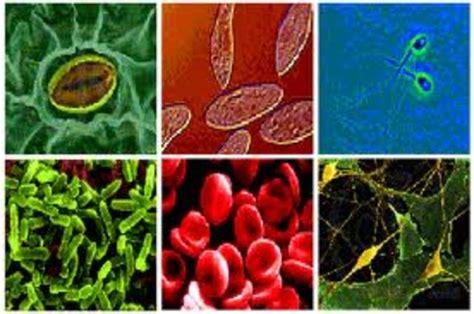 El Desarrollo de la Biologia timeline | Timetoast timelines