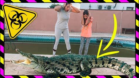 @El Diario de Lucia *REACCIONA* Al COCODRILO GIGANTE De La ...