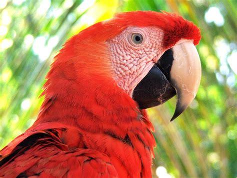 El Edén asediado: la increíble fauna salvaje del Amazonas ...
