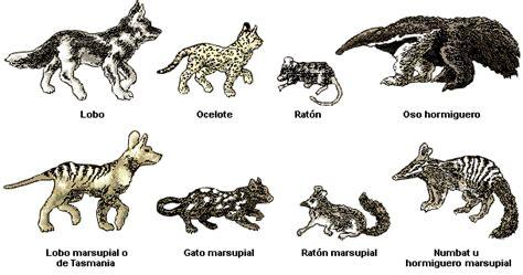 el encanto de la biologia: Evolución