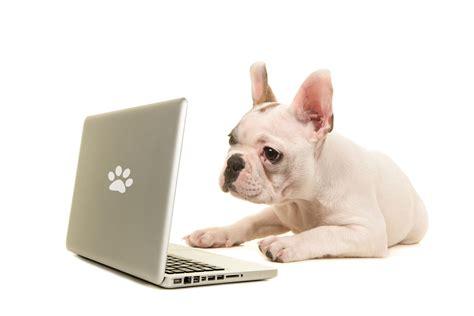 El encanto de las tiendas de mascotas en línea   El Sensato