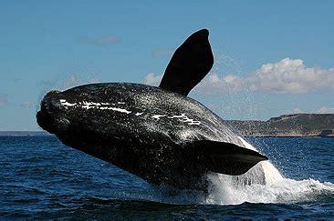 El estudio sobre ballenas más largo del mundo
