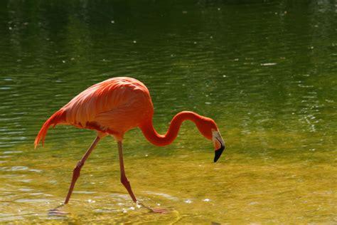 El Flamenco! Imagen & Foto   animales, animales salvajes ...