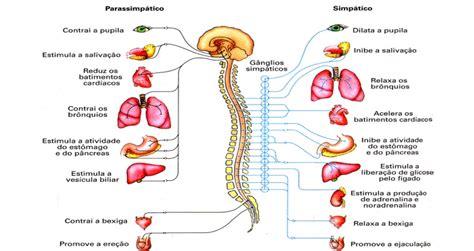 El funcionamiento del sistema respiratorio El funcionamie...