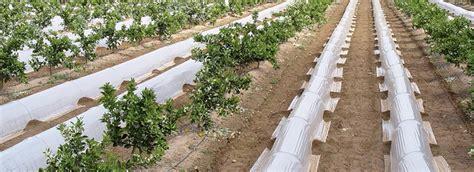 El glifosato y los productos fitosanitarios ...