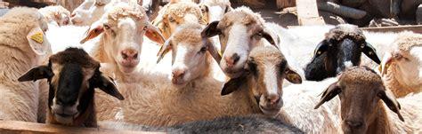 El Gobierno de Canarias aprueba el Programa de Cría de la ...
