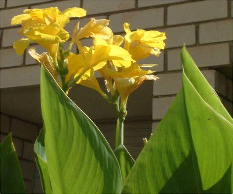 El huerto de Ramón: Flores de plantas ornamentales III