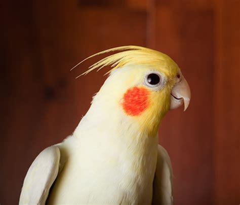 El insólito baile de un pájaro que es furor en las redes