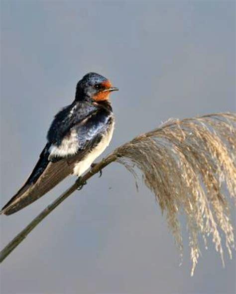 El invierno es 'clave' para las aves en España