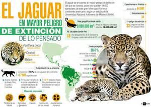 El jaguar, en serio peligro de extinción
