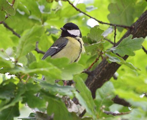 El jardín de los pájaros   Para Pájaros
