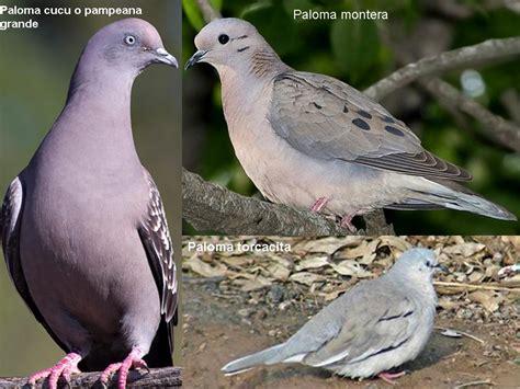El Magazin de Merlo: Aves que había que ir a su hábitat ...
