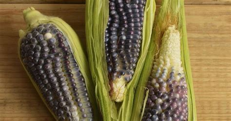 El maíz azul, el más importante de los granos de color en ...