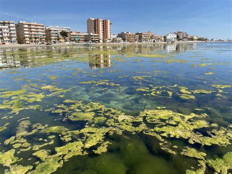 El Mar Menor: ¿está  optimo  para bañarse?   Murcia Noticias