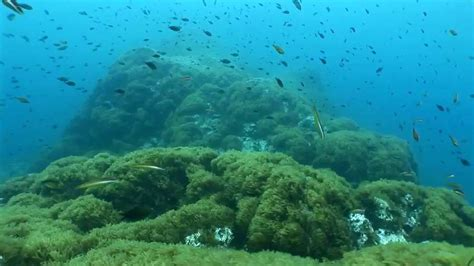 El mar sufre un exceso de acidez   Ciencia   EL PAÍS