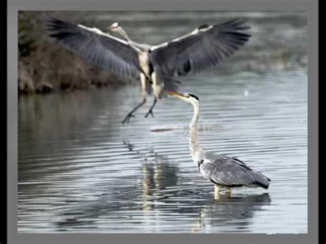 El maravilloso vuelo de las aves    YouTube