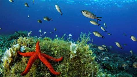 El Mediterráneo devora a sus peces