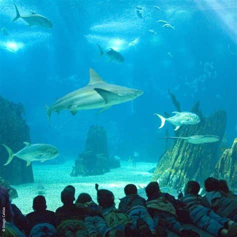 El mejor acuario del mundo está en Lisboa   Foto 1