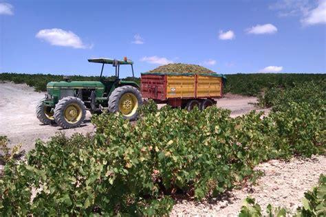 El Ministerio de Agricultura fija en 4.950 hectáreas la ...