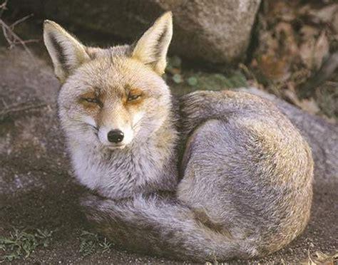 El Mundo Animal En Peligro De Extincion: Animales casi ...