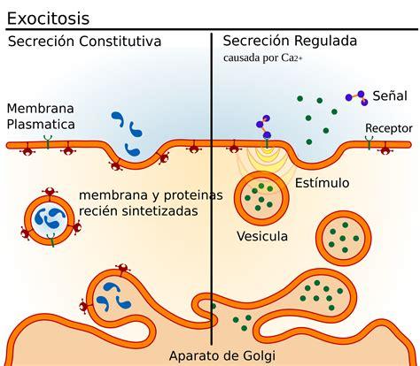 El Mundo de la Biología Celular