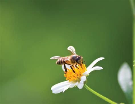 El mundo de las abejas   Mi Devocional