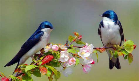 El mundo podría tener unas 18.000 especies de aves
