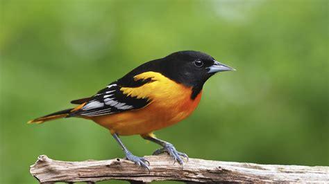 El mundo se puede quedar sin pájaros