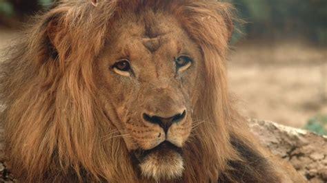 El Nuevo Modelo del Zoo de Barcelona   YouTube