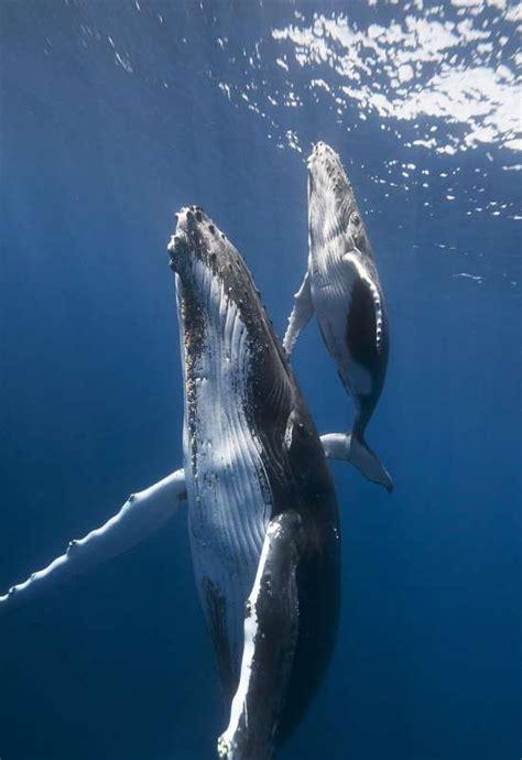 El nuevo reto fotográfico de Juanmi Alemany, la ballena ...