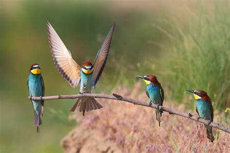 El número de aves comunes en declive se ha triplicado en ...