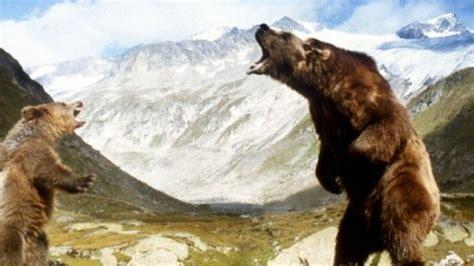 El oso, ver online en Filmin