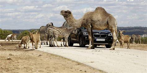 El otro zoo de Madrid es un Safari a media hora del centro ...