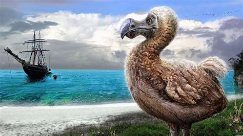 El Pájaro Dodo, una trágica historia que lo llevo a su ...