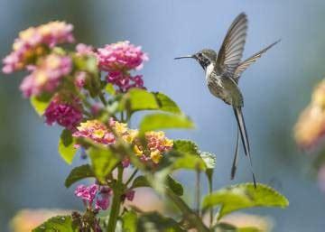 El pájaro que ayuda a las plantas a tener sexo   Planeta ...