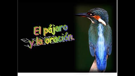 EL PAJARO Y LA ORACION.   YouTube