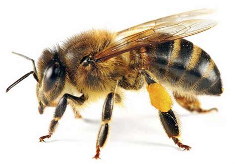 El panal de abejas: HISTORIA DE CINCO ABEJAS REINA Y UN ...