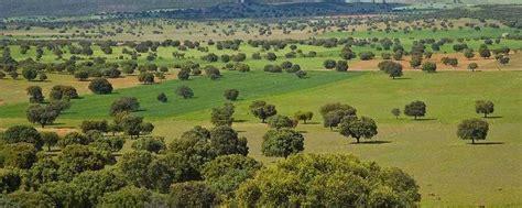 El Parque Nacional de Cabañeros cumple hoy su 20 ...